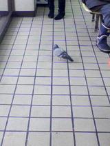 はと in 待合室。
