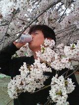 桜とファンタのコラボ