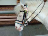 昼寝中の馬